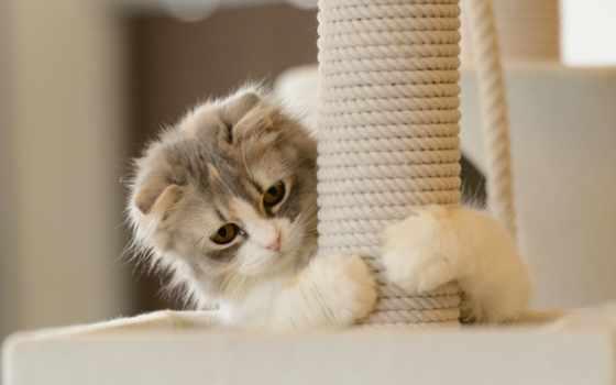 twitter, оставить, возможность, чтобы, кошка, пушистый, животные, красивые, подборка, комментарий, computerdesktopwallpaperscollection, ссылка, desktop, computer, игра, collection, есть, лапы,