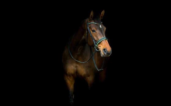 лошадь, планшет