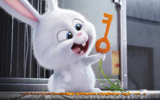 life, pets, secret, singapore, movie,