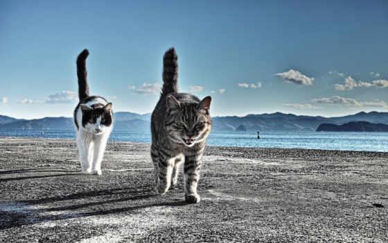 cats, пляж, выгул, песок, два, кот, mountains,