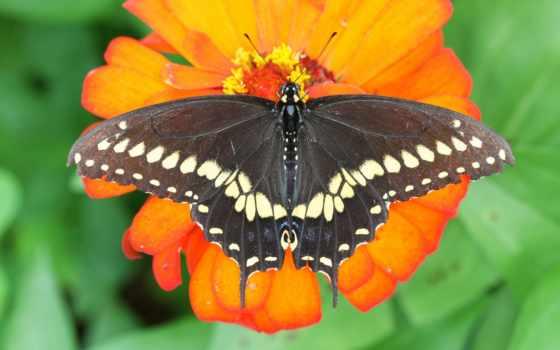 resimleri, indir, kelebekler, bedava, free,