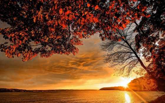 осень, природа, небо