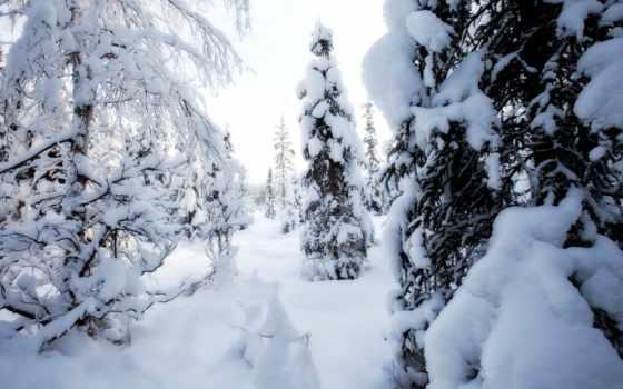 con, winter, imágenes