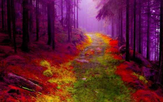 лес, forests, природа, фон, free, тропинка, туман, тона, trees,