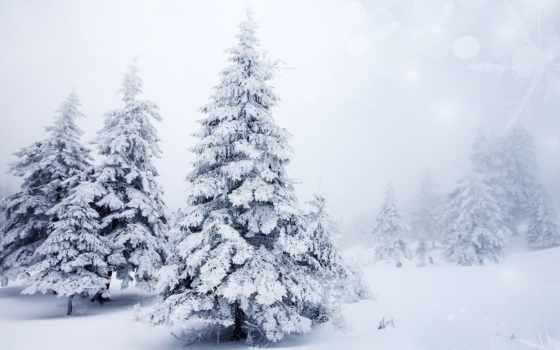 winter, снег, природа, елки, trees, landscape, широкоформатные, снежинки,