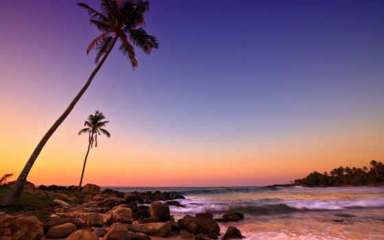 берег, океана, fone, пальмами, растущими, sri, скалистый, июнь, неба, lanka, берегу,