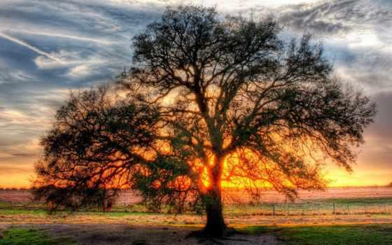 дерево, ветвистое, просвет, солнца, об, trees, pinterest, природа,