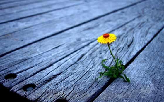 strong, одинокий, природа, flowers, но, зелёный,