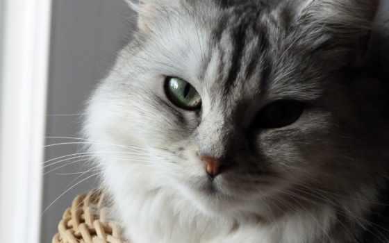 parede, gato, cinza, papel, olhos, zhivotnye, verdes, top, кот, cores,