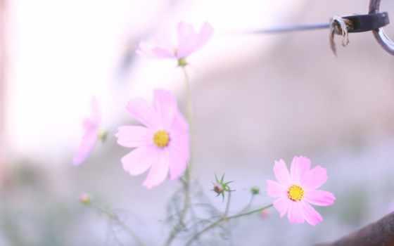 весна, страница, макро, розовые, размытость, cvety, легкость, растения,