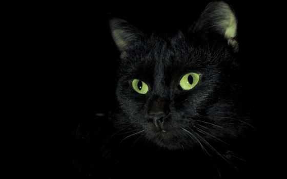 кошки, кот, черная, коты, черной, black, zhivotnye, морда, котики,