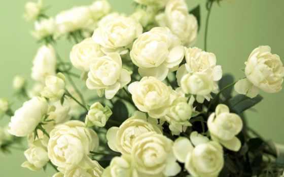 бутон, здорова, счастлива, garden, всегда, именем, мама, очень, you, взгляд,