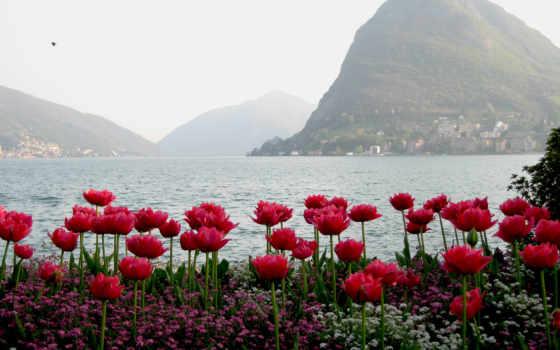 горы, тюльпаны, вода, цветы, hissə, вид, flowers, туман, весна,