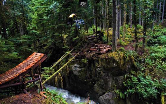freeride, лес, трамплин