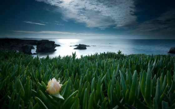 цветок, одинокий, priroda