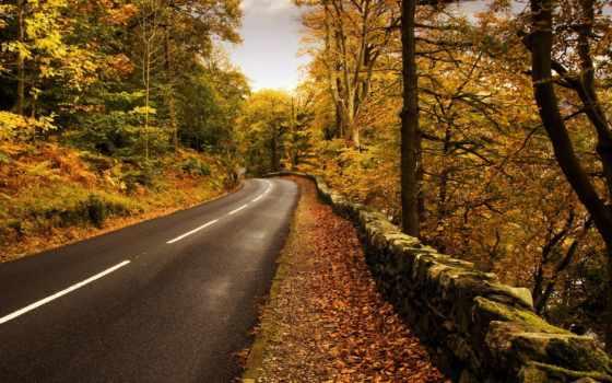 дорога, осень, природа
