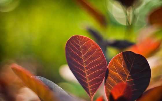 растения, природа, листва, яркие, макро, цветы,