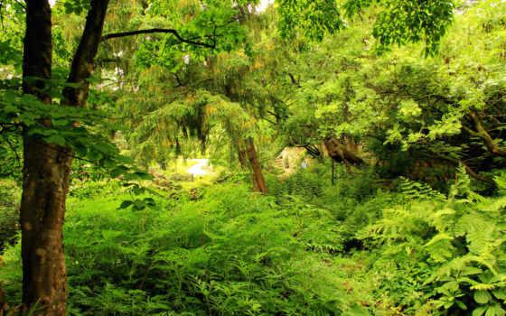 природа, лес, дървета
