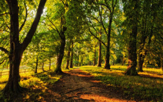 sunny, лес, id, миб, wallpapersafari, хвойный, desktop, трек, trees,