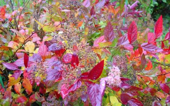 осень, drawing, тематика, цвета, цветы, коллекция, shirokoformatnyi