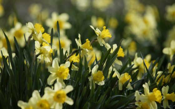 Цветы 25431