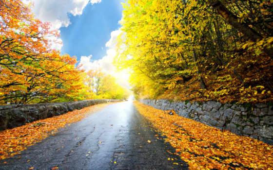 дорога, природа