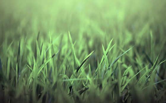 трава, зелёная, природа