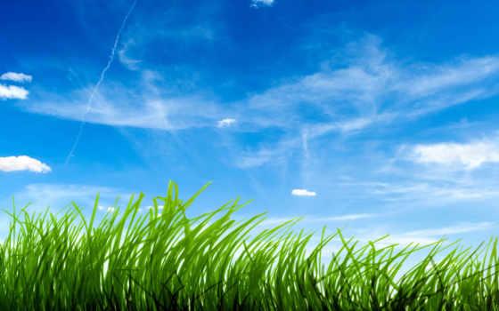 трава, зелёная, небо Фон № 121622 разрешение 1920x1200