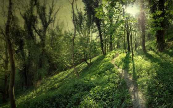 лес, загружено, уже, коллекция, лучшая, высококачествен, дороги, russian, природы,