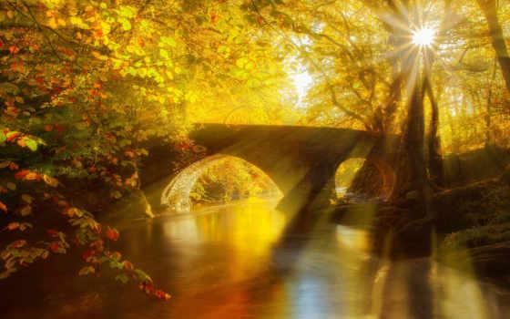 камень, мост, лес