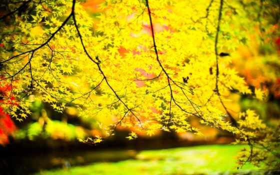 листья, природа, дерево, пасть, осень, landscape, лес, осеннее,