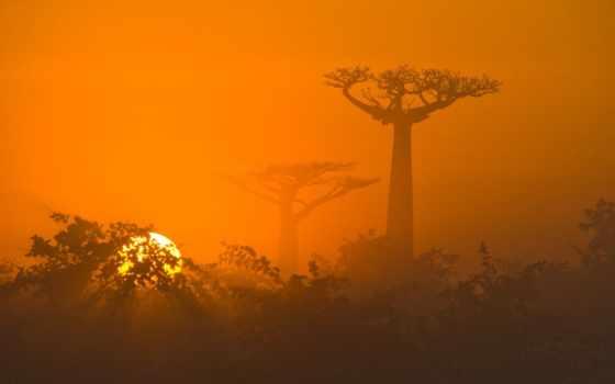 природа, африка, африке, tgxs, мадагаскар, саванна, стоковое, trees, картинка, яndex, баобабы,
