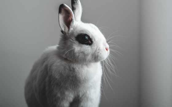кролик, музыка, моментальный, beat, home, ну, afrobeat, write, млекопитающее