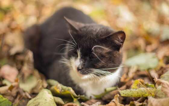 кот, осень, leaf, best, loaded, уж, телефон