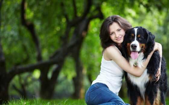 animal, собака, home, human, could, popular
