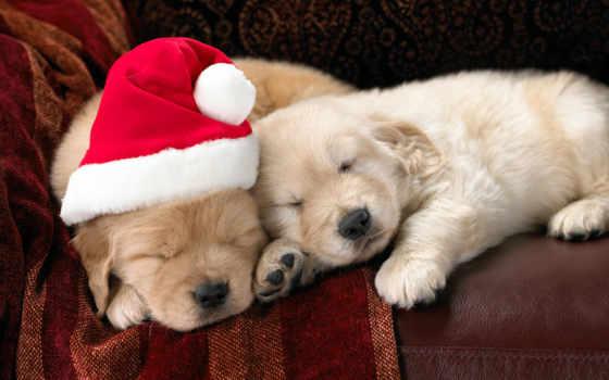 новогодние, собаки