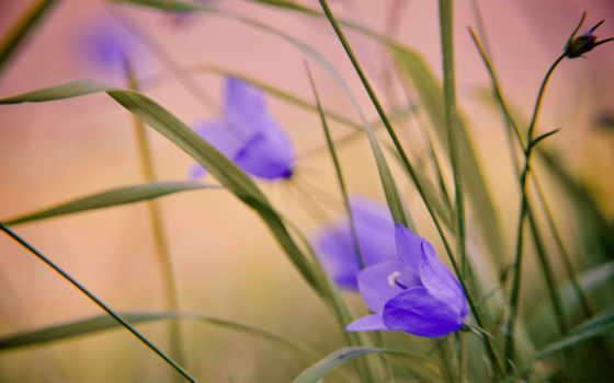 качества, цветы, сайте, сиреневые, макро, вниманию, вашему, высокого, отличного, нашем, подберите,