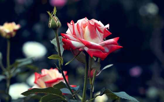 цветы, tapety, flora, ría, kwiaty,