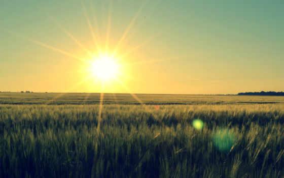 солнца, rising, поле, со, sun, полем, imagesbase, колосья, пшеницы,
