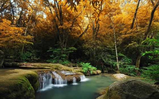 лес, река, осень, trees, водопад, фотообои, landscape, папоротник, высоком,