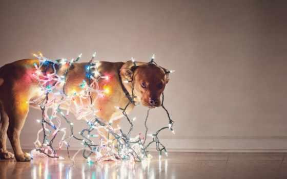 garland, собака, елочной, праздник, гирлянде, гирлянды, новогодняя, нить, лампочки, которых,