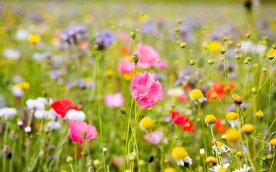 цветы, полевые, них