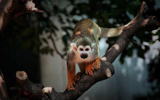 обезьяна, ветка, дерево