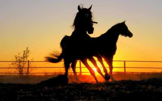 лошадь, кони, закат, лошади, horses, art, вечер, трава, лошадей,