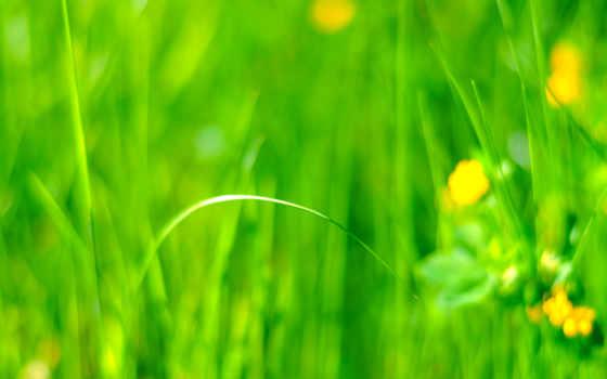 луг, iphone, трава, cvety, салатовый, поле, house, пейдж, колл, центра, конкурса,