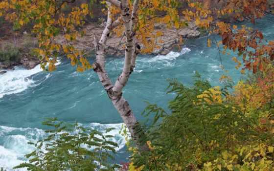 природа, берег, береза, кусты, река, that, игры, листва, зелёный, поле,