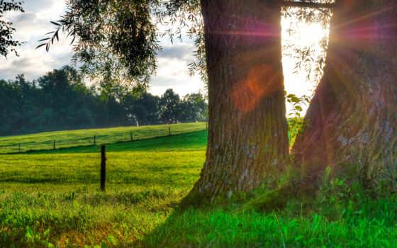 роса, трава, природа, sun, утро, капли, дерево,