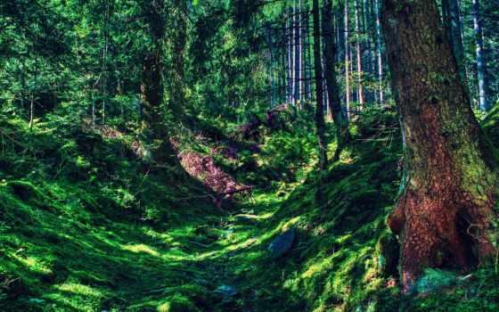 лес, пейзажи -, лесные, природа, landscape, коллекция, пользователя, яndex, красивые, природы,