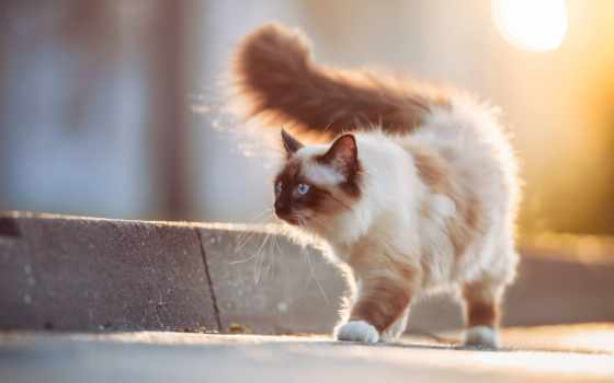 кот, cats, animals, pets, desktop, cute,
