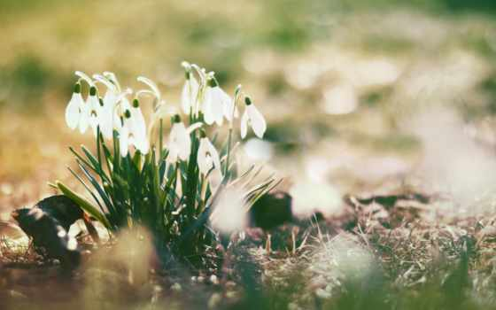 настроение, весеннее, весенние, будет, subscribe, followers, time,